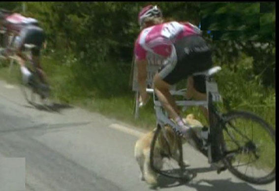 Tour De France Dog...made of steel !! GD4049995@Stage-nine-Val-d'Iser-8324