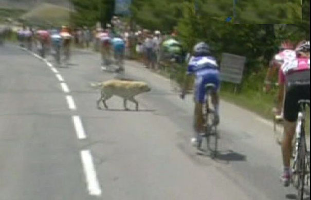"The image ""http://image.guim.co.uk/Guardian/sport/gallery/2007/jul/17/tourdefrance.cycling/GD4049996@Stage-nine-Val-d'Iser-8731.jpg"" cannot be displayed, because it contains errors."