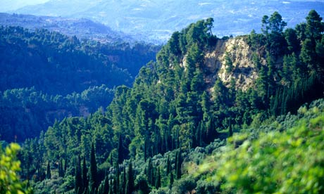 trees in Arcadia, Peloponnese, Greece