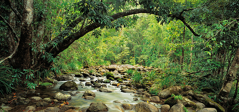Nature reserves: Mossman River tributary, Queensland, Australia