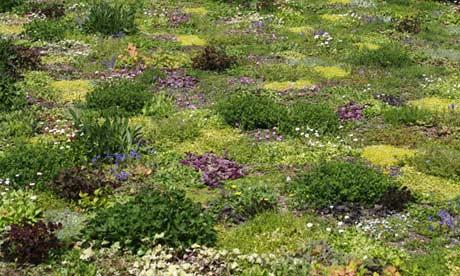 The floral lawn at Avondale Park