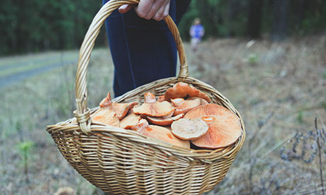 Mushrooming