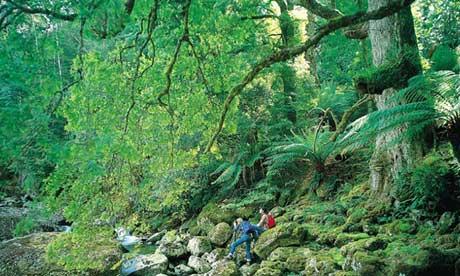 tasmania forest