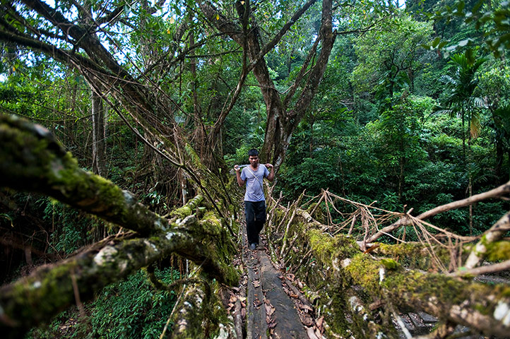 Ten best: A man crosses one of the living root bridges in Northeast India